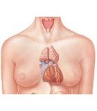 Mucosas